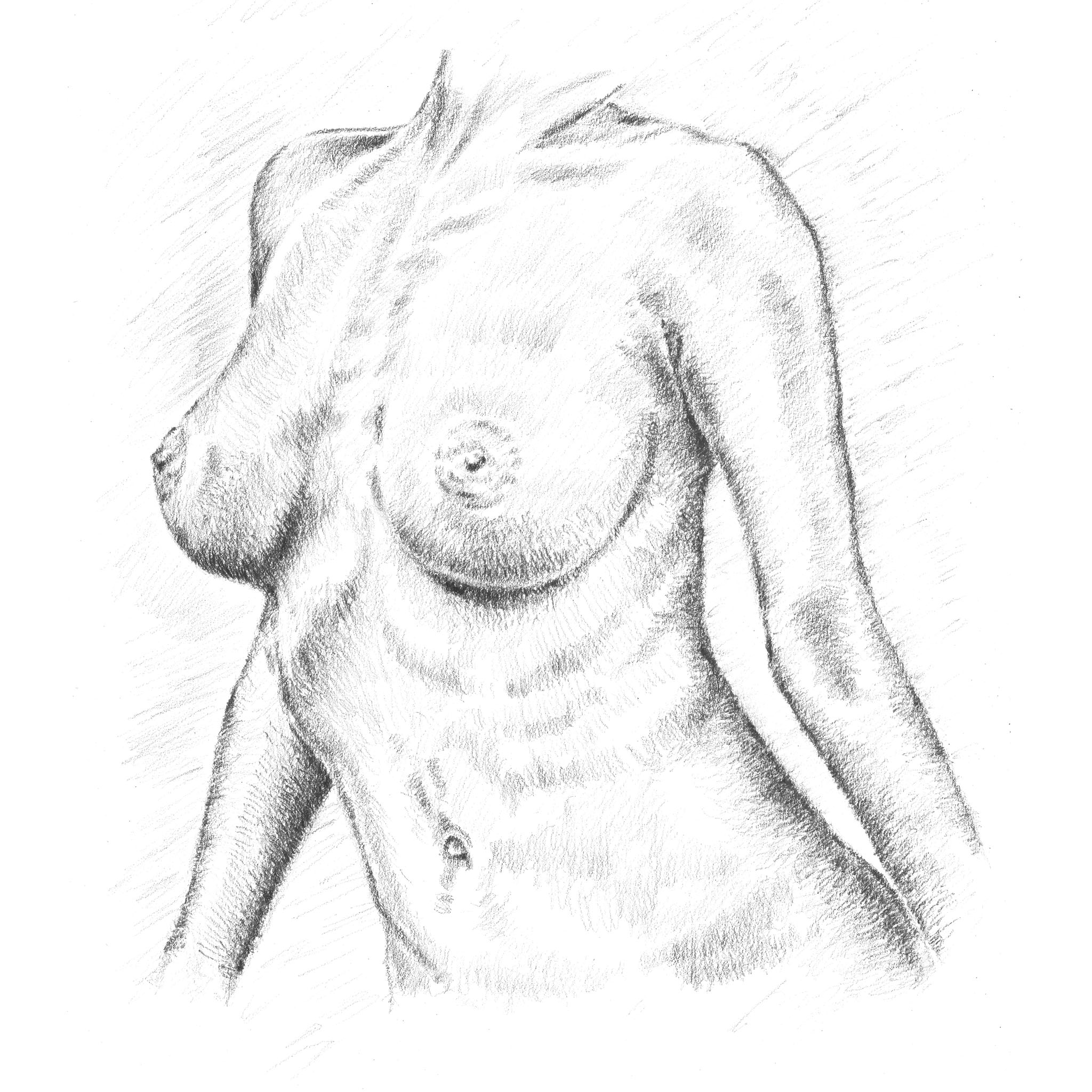 Breasts sketch