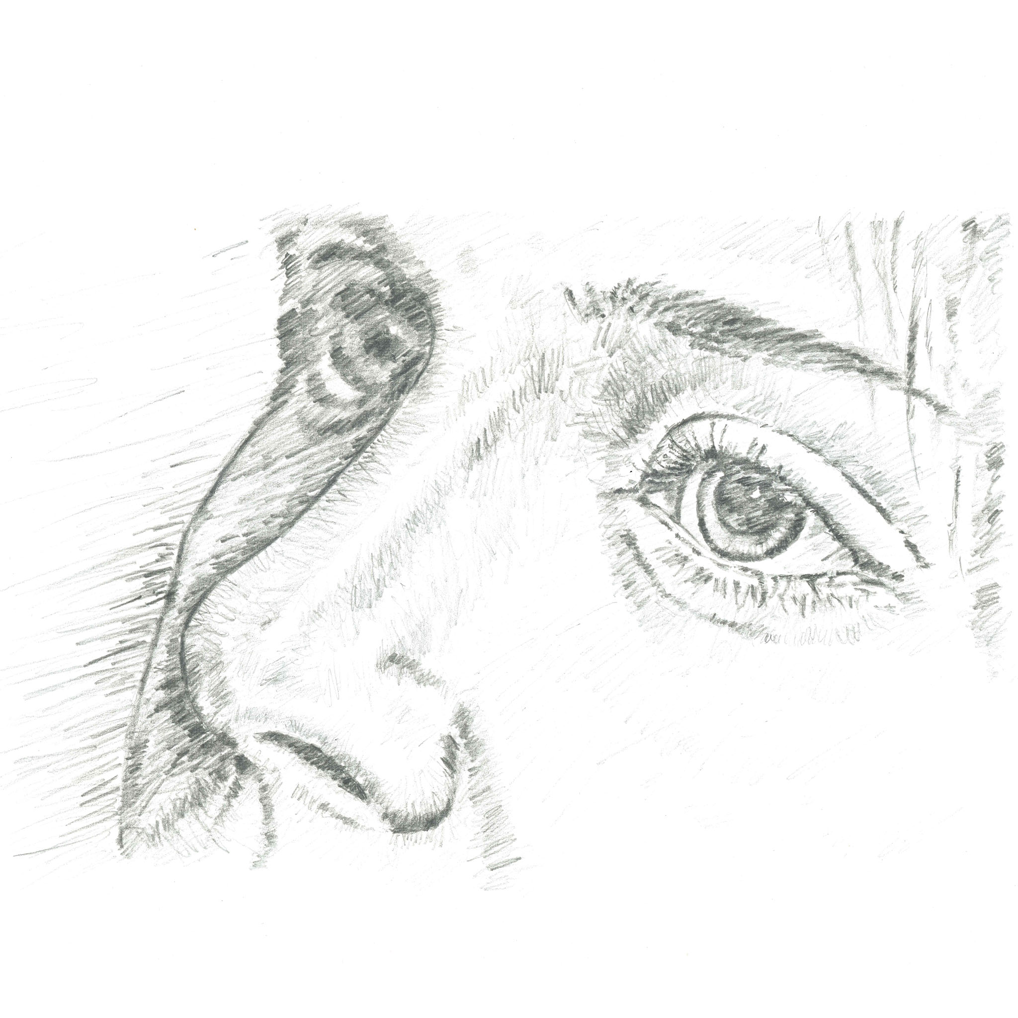 Sketch of eyes and nose