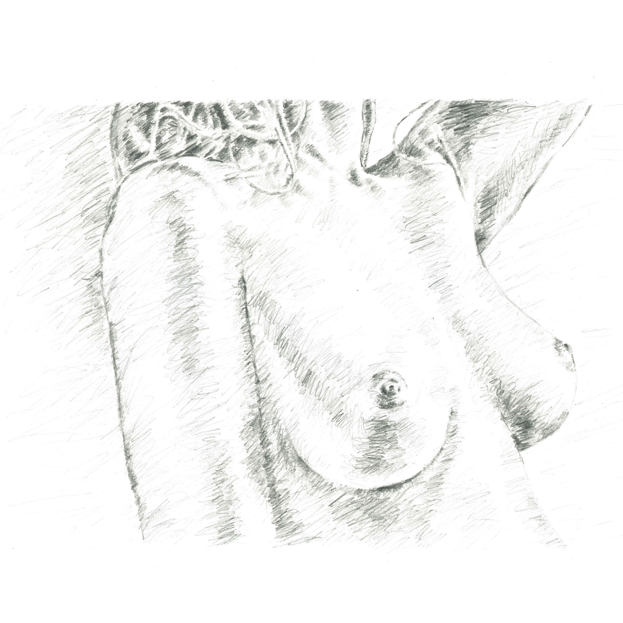 Sketch of breasts