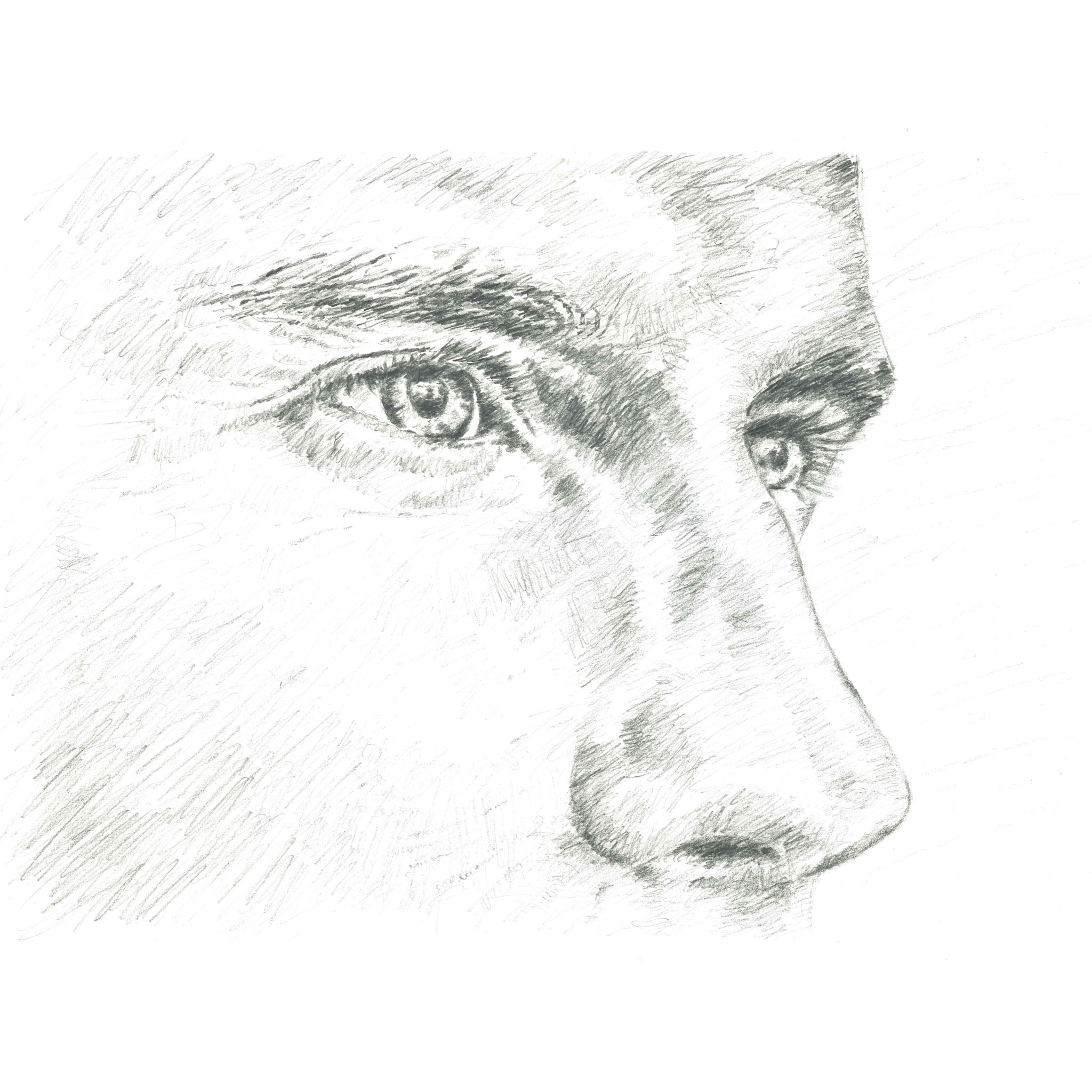 Sketch of male face showing nose